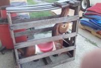 jackass plastic carousel