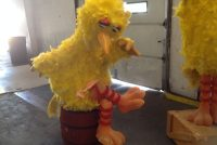 big bird sitting