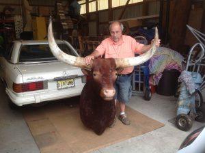 taxidermy bull