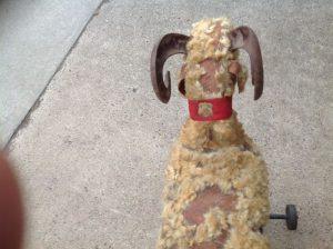 odd fellows goat 5